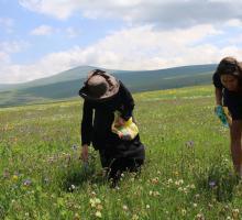 Zbieranie ziół. Gruzja Yoanna Ayers w regionie Dżawachetii